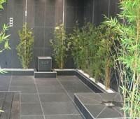 vert-espace-bambou-artificiel