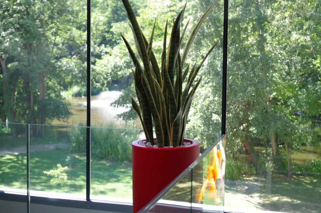 aménagement-intérieur-plante-pot