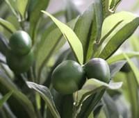 vert-espace-olivier-artificiel