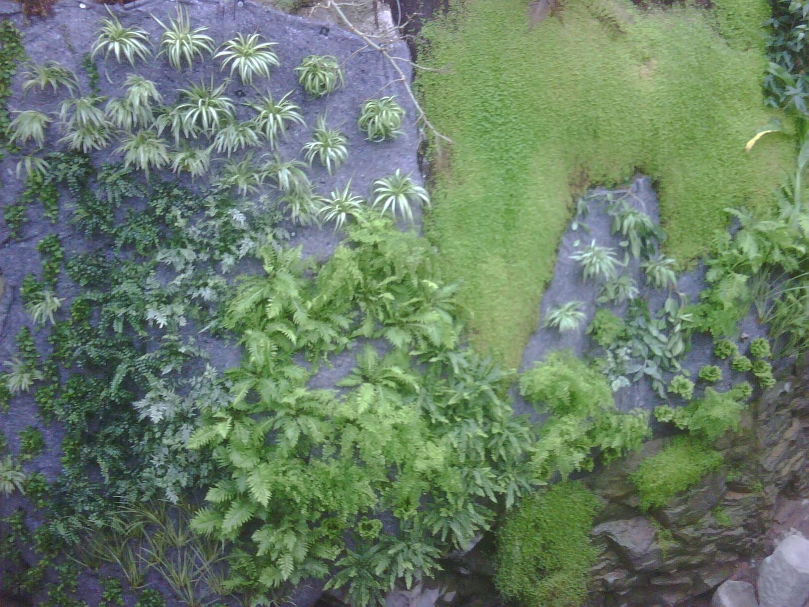 mur-végétal-intérieur-vulcania